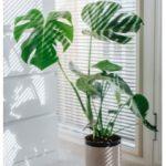 Plantas en el suelo de tu casa